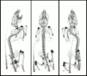Bone imaging in Mouse